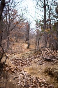 Pre-Sprung Woods