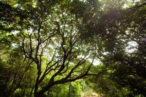 Bright Trees